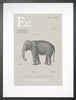 Elephant in Warm Grey Art Print