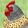 Fancy Chicken Canvas Reproduction