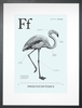 Flamingo in Light Blue Art Print
