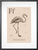 Flamingo in Sand Art Print