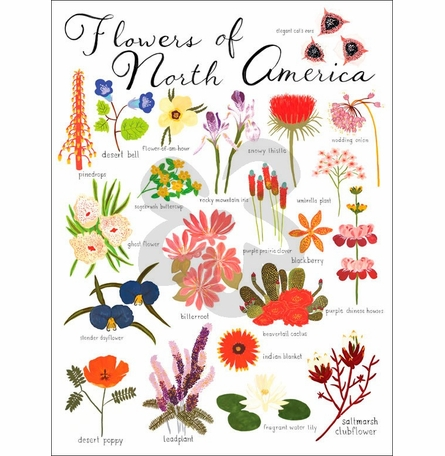 Flowers of North America Canvas Wall Art