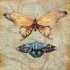 Garden Butterfly and Moth Canvas Wall Art