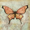 Garden Butterfly Canvas Wall Art