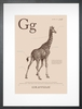 Giraffe in Sand Art Print