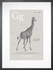 Giraffe in Warm Grey Art Print