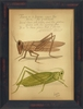 Grasshoppers 1837 Framed Wall Art