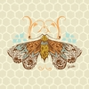 Honeycomb Moth Canvas Wall Art
