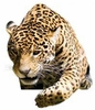 Jaguar Easy-Stick Wall Art Stickers