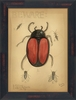 Japanese Beetle Framed Wall Art