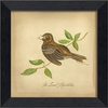 Least Flycatcher Bird Framed Wall Art