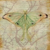 Luna Moth Canvas Wall Art