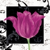 Magenta Tulip IV Canvas Wall Art