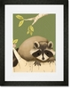 Meeko the Raccoon Framed Art Print