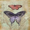 Monarch and Moth Canvas Wall Art