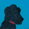 Musette Poodle Canvas Wall Art