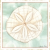 Ocean Sanddollar Canvas Reproduction