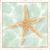 Ocean Starfish Canvas Reproduction