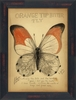 Orange Tip Butterfly Framed Wall Art