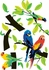 Parrots Wall Decals