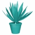Planted Agave