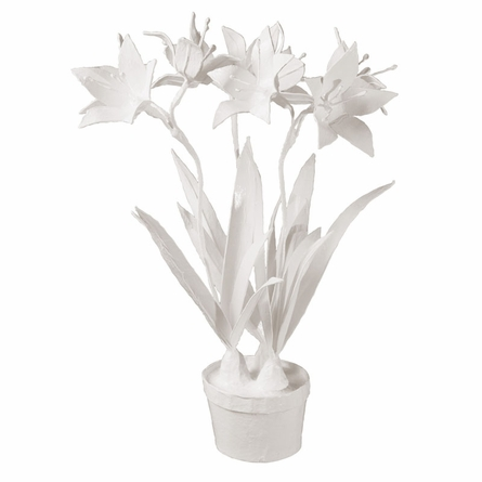 Potted Paper Whites