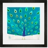 Proud Peacock Framed Art Print