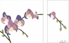 Purple Orchid Arrangement Series Diptych Canvas Wall Art