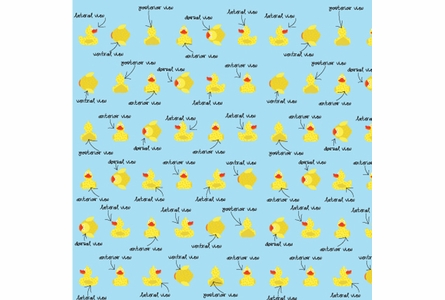 Quacking Ducks Removable Wallpaper in Baby Blue