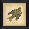 Robin Bird Framed Wall Art