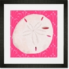 Sand Dollar on Punch Framed Art Print
