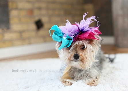 Sheer the Love Pet Headpiece