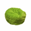 Small Beanbag in Lime Green Fuzzy Fur