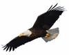 Soaring Eagle Easy-Stick Wall Art Sticker