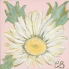 Sweet Pea Daisy Canvas Reproduction