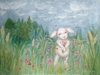 Sweet Pea in the Field Canvas Reproduction
