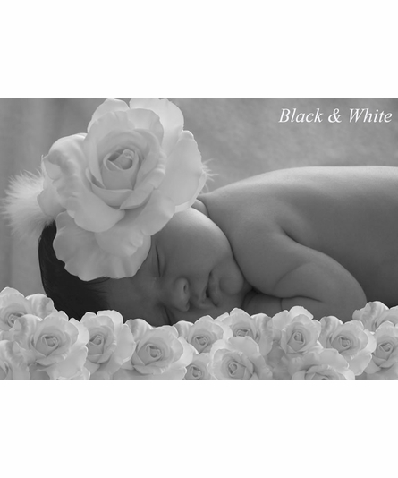 Sweet Roses Canvas Birth Announcement in Posey Pink