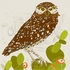 The Burrowing Owl Canvas Wall Art