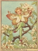 The Pear Blossom Fairy Canvas Reproduction