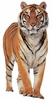 Tiger Easy-Stick Wall Art Sticker