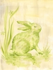 Toile Bunny Canvas Wall Art