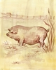 Toile Piggy Canvas Wall Art