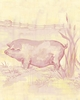Toile Piggy in Pink Canvas Wall Art