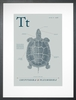 Turtle in Blue Grey Art Print