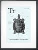Turtle in Light Blue Art Print