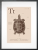 Turtle in Sand Art Print