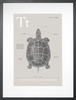 Turtle in Warm Grey Art Print