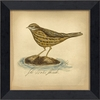 Water Thrush Bird Framed Wall Art