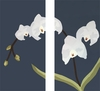 White Orchid Diptych Canvas Wall Art