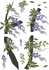 Wisteria Wall Decals