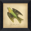 Yellow Warbler Bird Framed Wall Art